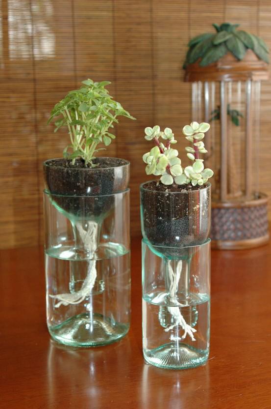 plantas-em-miniatura